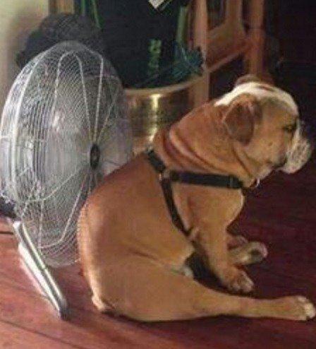 Лучшие способы охладить свою собаку в летнюю жару (ФОТО)