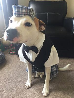 В Шотландии на свадьбе собаку нарядили в национальную одежду (ФОТО)