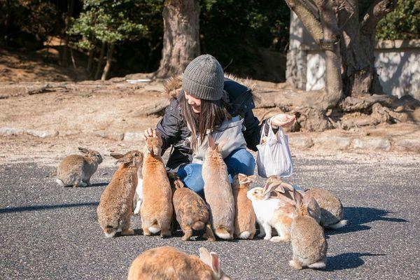 """Самое """"пушистое место"""" на Земле: остров кроликов в Японии (ФОТО)"""