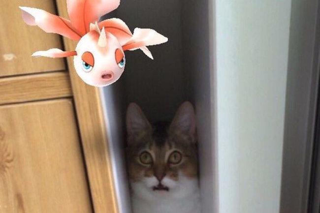 Невероятно: домашние питомцы видят покемонов (ФОТО)