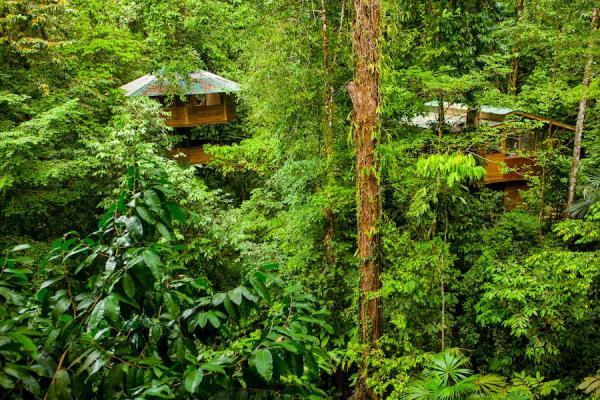 Жилище в сердце тропического леса: диковинный отель в Южной Америке (ФОТО)