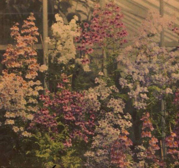 Автохромная красота природы на фотографиях столетней давности (ФОТО)