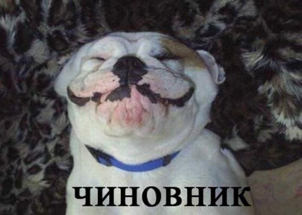 15 собак в роли людей, которых все мы знаем (ФОТО)