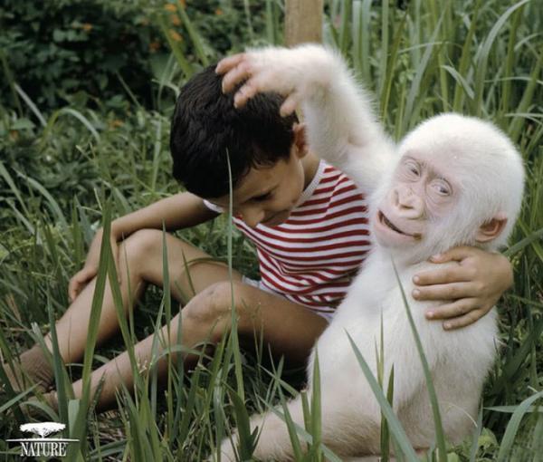 Единственные в своем роде: самые необычные альбиносы планеты (ФОТО)