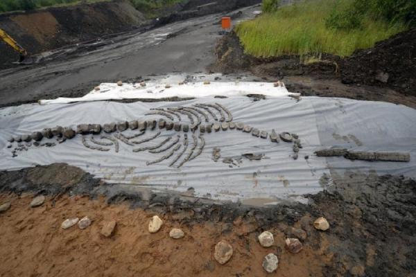 Палеонтологи нашли скелет тюленя возрастом 11 млн. лет (ФОТО)