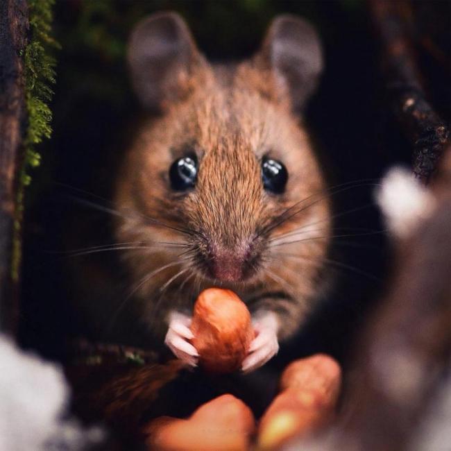Шикарные снимки лесных животных (ФОТО)