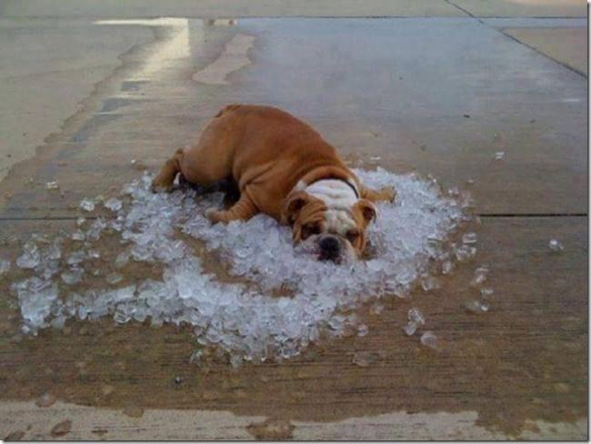 20 по-настоящему «жарких» снимков (ФОТО)