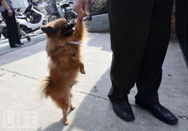 15 собак, которые наплевали на стереотипы (ФОТО)