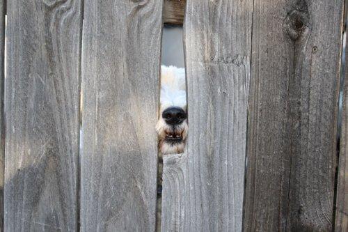 Отчаянные собаки, которые жаждут поздороваться (ФОТО)