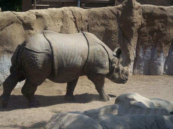 В мире животных: один из крупнейших зоопарков в мире (ФОТО)