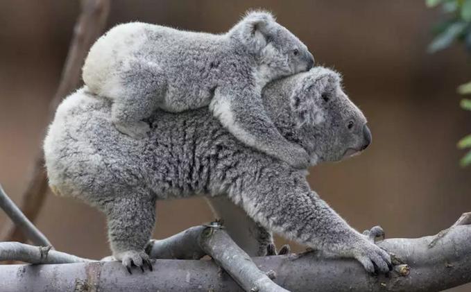 В мире животных: Родители и их умилительные детеныши (ФОТО)