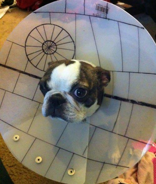 Креативные владельцы собак, которые делают для своих питомцев необычные вещи (ФОТО)
