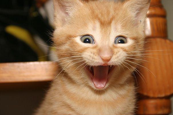 Самые счастливые коты, которые мило улыбаются (ФОТО)