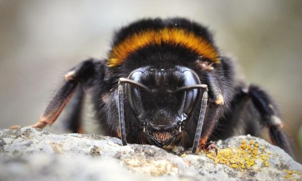 Захватывающая макрофотография насекомых (ФОТО)