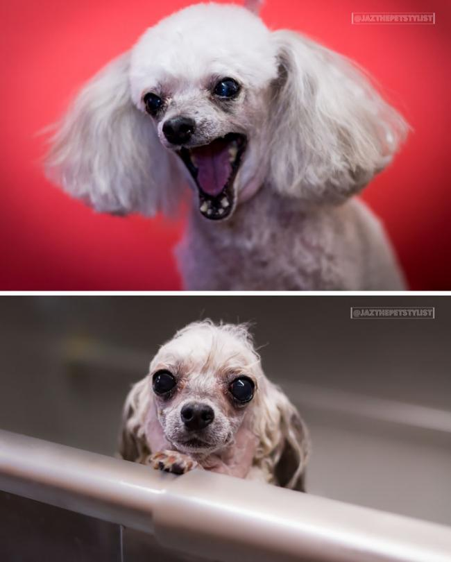 20 смешных собак до и после принятия ванны (ФОТО)