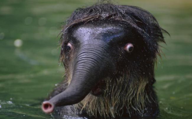 Смешные животные, впавшие в шок от увиденного (ФОТО)