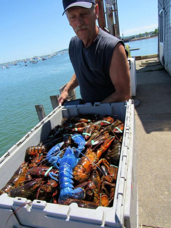 Диковинный улов: американский рыбак поймал редчайшего омара  (ФОТО)