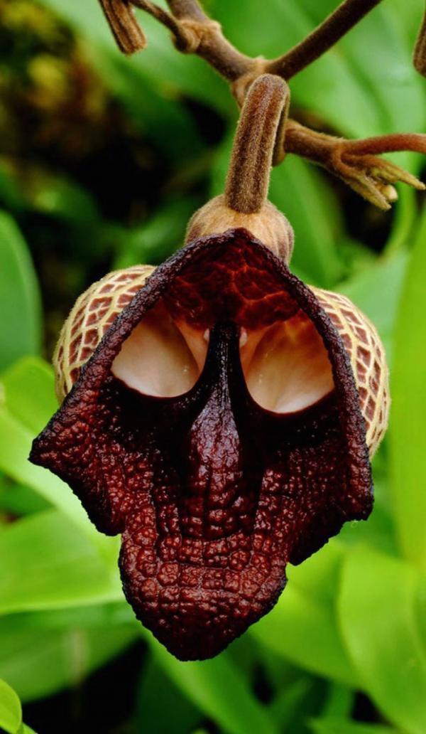 Самые причудливые цветы, созданные природой (ФОТО)