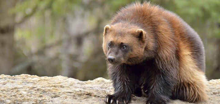 ТОП-15 опасных животных, которые притворяются милахами (ФОТО)
