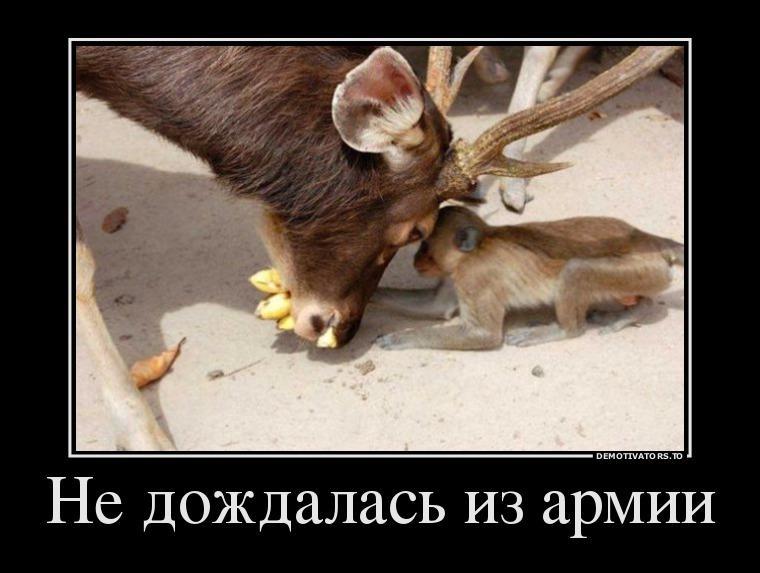 Подборка веселых демотиваторов для воскресного утра (ФОТО)