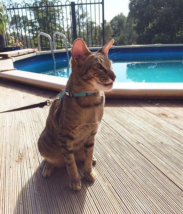 20 котов, которые проиграли битву с пчелами (ФОТО)