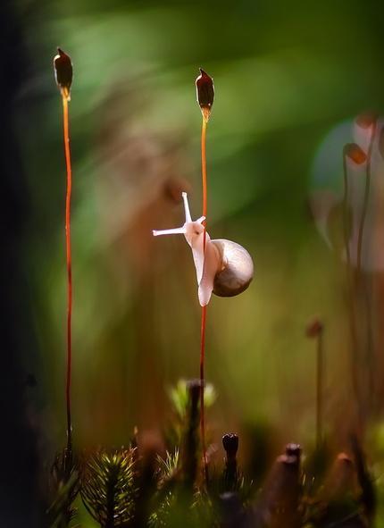 Маленькие миры: красочный фотопроект мастера из Украины (ФОТО)