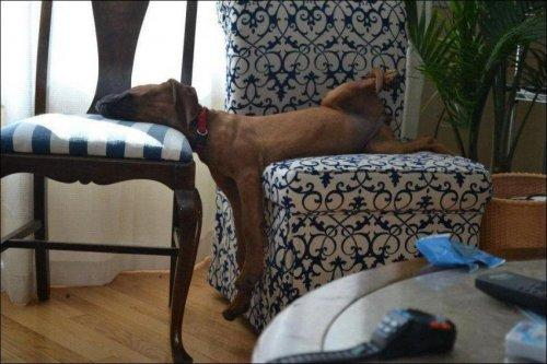 Чем занимаются собаки в отсутствие хозяев (ФОТО)