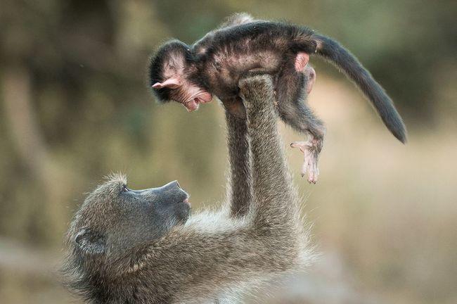 12 доказательств того, что люди являются прямыми родственниками обезьян (ФОТО)