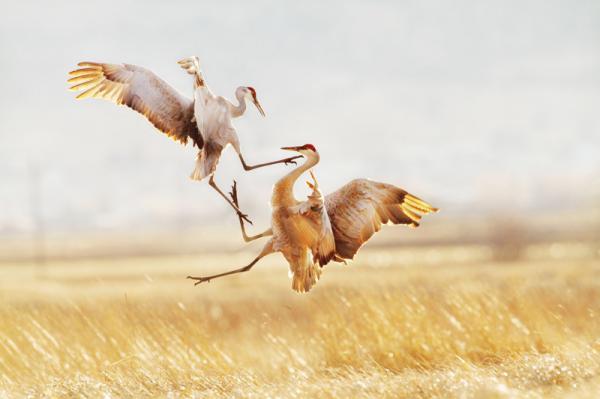 Удивительная природа. Настоящие шедевры в фотошопе не нуждаются (ФОТО)