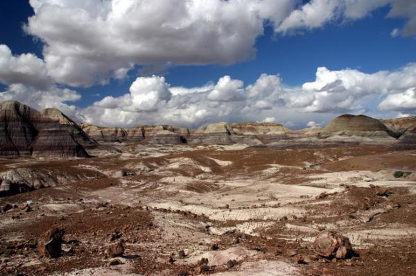 Место, где история остановилась: окаменевший лес в американской Аризоне (ФОТО)
