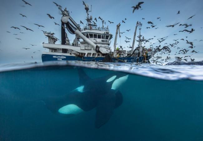 Лучшие снимки дикой природы, от которых захватывает дух (ФОТО)