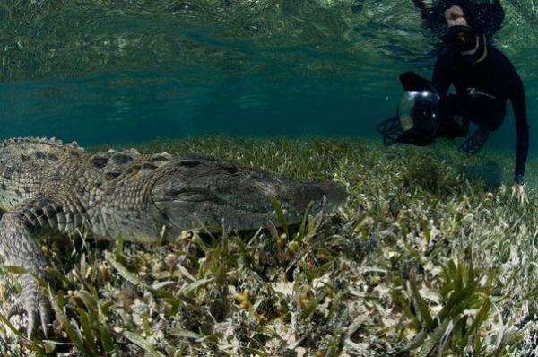 Подводная опасность: ужасающая прогулка с крокодилами (ФОТО)