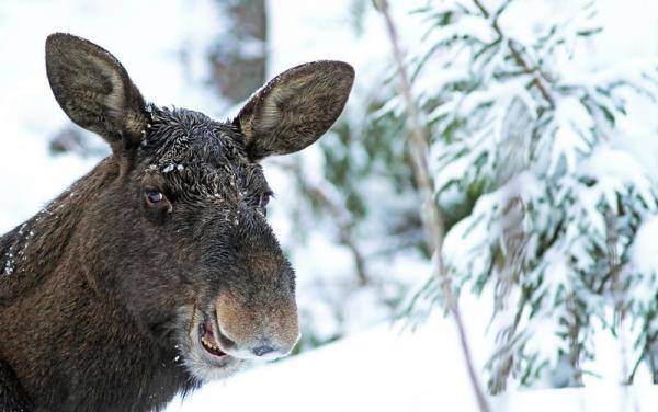 Лови момент. Забавные снимки дикой природы (ФОТО)