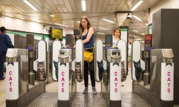Станцию лондонского метро украсили фотографиями кошек из приютов (ФОТО)