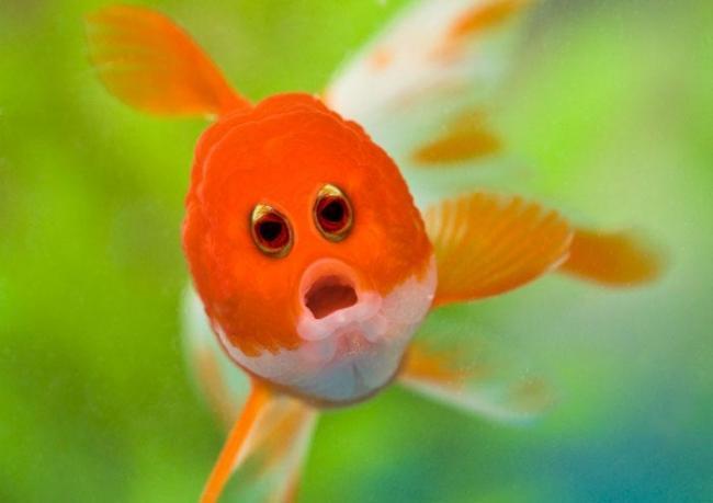 Как бы выглядели животные, если бы у них были человеческие глаза (ФОТО)