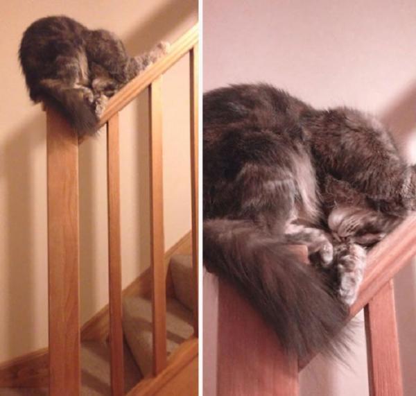 Забавные коты, которые нашли самые неподходящие места для сна (ФОТО)