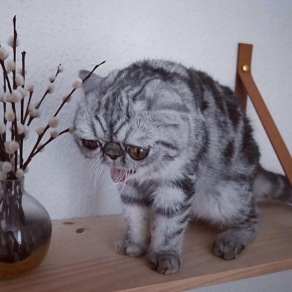 Кот с большими глазами стал любимцем пользователей Сети (ФОТО)