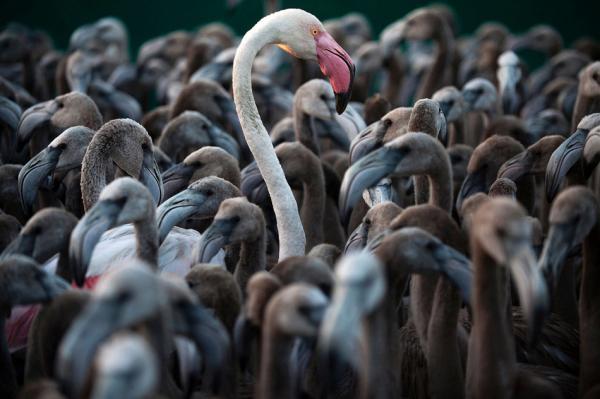 12 замечательных фотографий животных, доказывающих, что у них все как у нас (ФОТО)