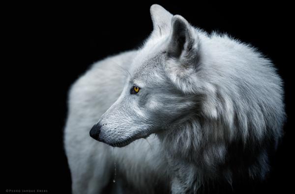 Портреты дикой природы в исполнении одного из наиболее титулованных фотографов Южной Америки (ФОТО)