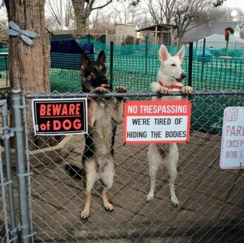 Самые очаровательные и неожиданные сторожевые псы (ФОТО)