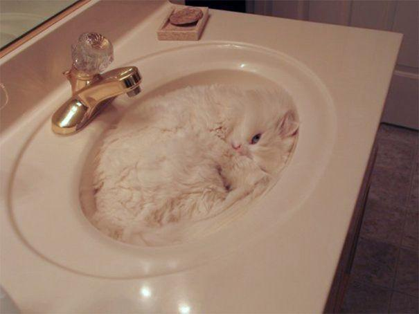 20 домашних животных, которых сложно отыскать в квартире (ФОТО)
