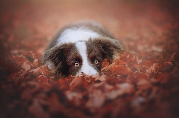 Смешные собаки в осеннем листопаде от фотографа Энн Гайер (ФОТО)
