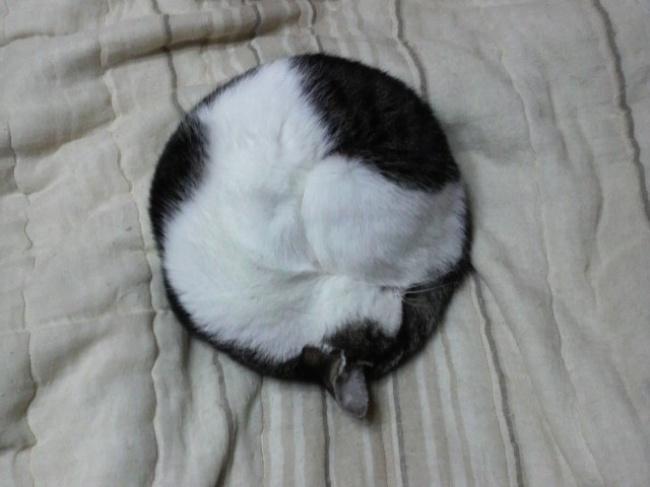 20 котов, которые могут спать где угодно (ФОТО)