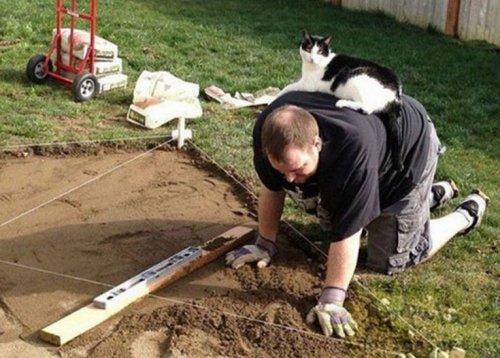 Смешные кошки, которым нужно внимание хозяина (ФОТО)