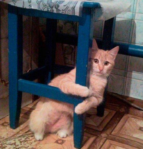 Забавные кошки, которые наблюдают за вами (ФОТО)