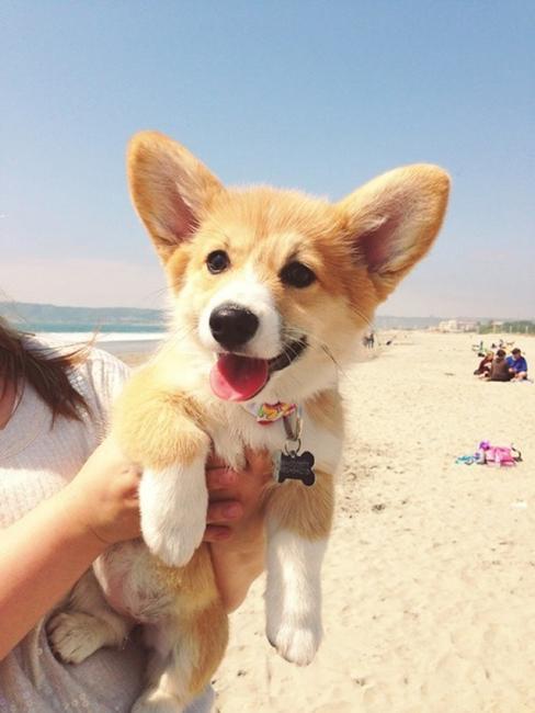 7 улыбок животных, которые поднимут настроение (ФОТО)