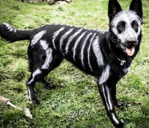 Самые страшные костюмы на Хэллоуин для собак (ФОТО)