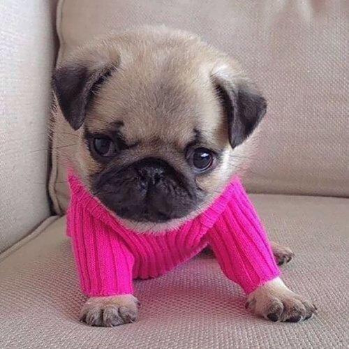 30 маленьких животных в миниатюрных свитерах (ФОТО)