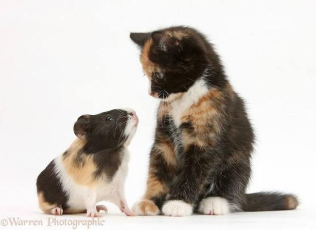 Разные животные одних и тех же окрасов (ФОТО)