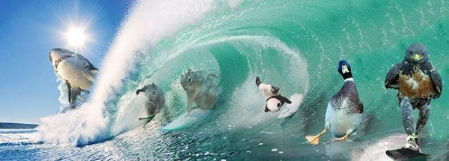 Фотошоперы устроили очередную битву из-за «крутого» ястреба (ФОТО)